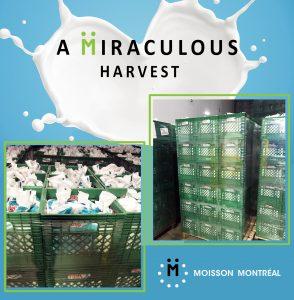 A Miraculous harvest